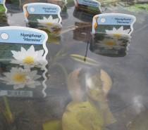 Wasserpflanzen und ihre Freunde