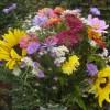 Sommerblumen und Stauden