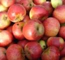 Apfelernte verwerten