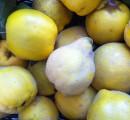Quitten – Marmelade, Gelee und Quittenbrot