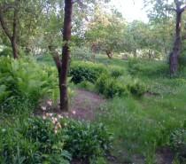 Gärten in aller Welt