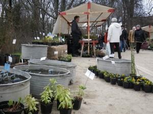 Wasserpflanzen auf dem Staudenmarkt