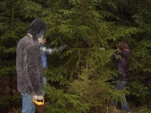 Weihnachtsbäume selbst schlagen