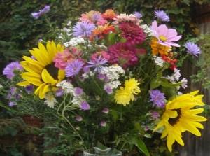 Sommerblumen bunte Vielfalt