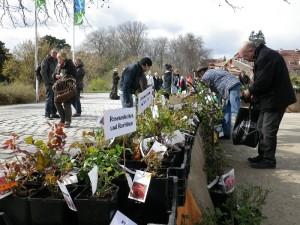 Staudenmarkt Botanischer Garten