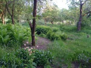 Garten - wild und barock
