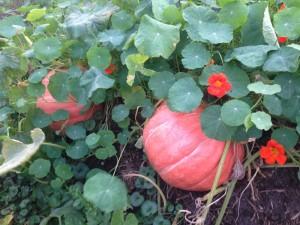 Zwei Schwergewichte kurz vor der Ernte