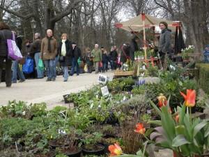 Staudenmarkt im Botanischen Garten